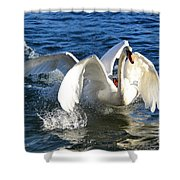 Swans Playing Shower Curtain