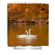 Swans Soft And Smooth Shower Curtain