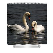Swans Swimming Shower Curtain