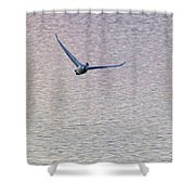 Swans Taking Off From Tagish River Shower Curtain