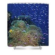 Swarms Of Small Baitfish Swim Shower Curtain
