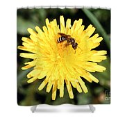 Sweat Bee Shower Curtain by Science Source