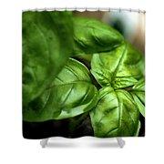 Sweet Basil From The Garden Shower Curtain