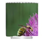 Sweet Bee Shower Curtain