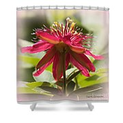 Sweet Dreams Passion Flower Shower Curtain