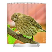 Sweet Finch Painted Effect Shower Curtain