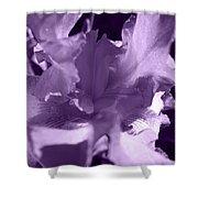 Sweet Lavender Shower Curtain