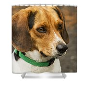Sweet Little Beagle Dog Shower Curtain