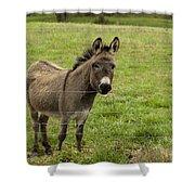 Sweet Little Donkey Shower Curtain