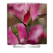 Sweet Little Rosebud Shower Curtain