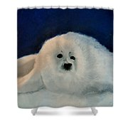 Sweet Little Winter Seal Pup Of My Soul Shower Curtain