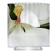 Sweet Magnolia Flower Shower Curtain