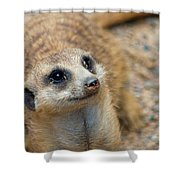 Sweet Meerkat Face Shower Curtain
