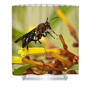 Sweet Morning Dew Shower Curtain