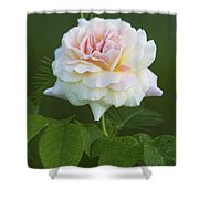 Sweet Morning Peace Rose Shower Curtain