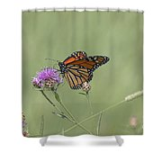 Sweet Nectar Shower Curtain
