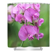 Sweet Pea 1 Shower Curtain