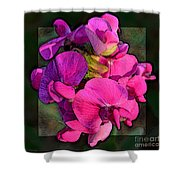 Sweet Pea Pop Out Photoart Square Shower Curtain