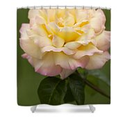 Sweet Peace Rose Shower Curtain