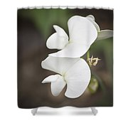 Sweet Peas Squared 2 Shower Curtain
