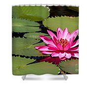 Sweet Pink Water Lily In The River Shower Curtain