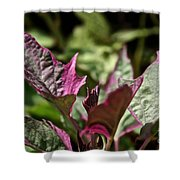 Sweet Potato Vine Shower Curtain