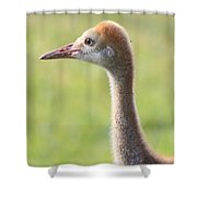 Sweet Sandhill Face Shower Curtain