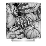 Sweet Sweet Dumpling In Black Shower Curtain