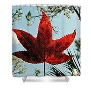 Sweetgum Shower Curtain