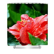 Sweetheart Red Shower Curtain