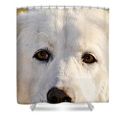 Sweetie In The Boonies Shower Curtain