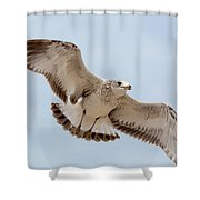 Swooping In For A Meal Shower Curtain