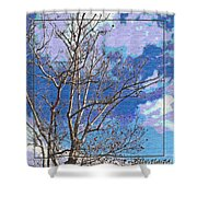Sycamore Tree Branch Art Shower Curtain