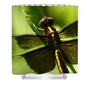 Symetry  Shower Curtain by Bruce J Robinson