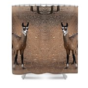 Synchronized  Shower Curtain