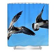 Synchronized Flying Shower Curtain