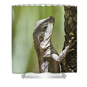 Ta-ta Lizard Shower Curtain