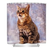 Tabby Cat Portrait Of A Cat Shower Curtain