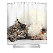 Tabby Kitten And Bichon Fris� Shower Curtain