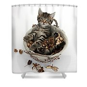 Tabby Kitten In Potpourri Basket Shower Curtain