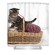Tabby Kitten Playing With Knitting Wool Shower Curtain