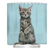 Tabby Kitten Sitting Up Shower Curtain