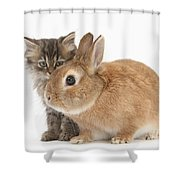 Tabby Kitten With Sandy Shower Curtain