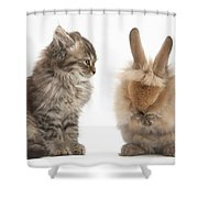 Tabby Kitten With Young Rabbit, Grooming Shower Curtain