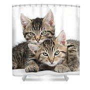 Tabby Kittens Cuddling Shower Curtain