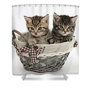 Tabby Kittens In A Basket Shower Curtain