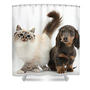 Tabby-point Birman And Dachshund Pup Shower Curtain