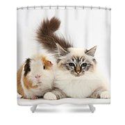 Tabby-point Birman Cat And Guinea Pig Shower Curtain