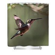 Tad Of Sunshine - Hummingbird Shower Curtain