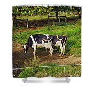 Tail Of Two Cows Shower Curtain